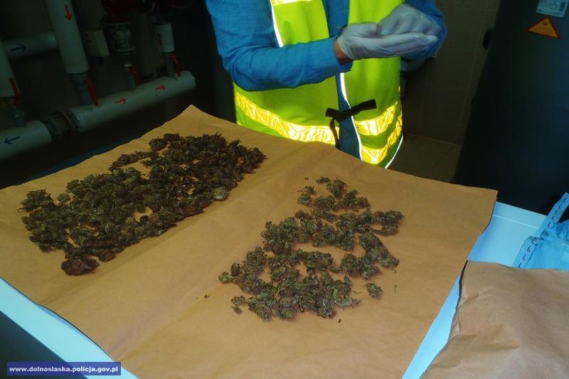 Ponad 800 porcji narkotyków przechwycili policjanci zpowiatu zgorzeleckiego